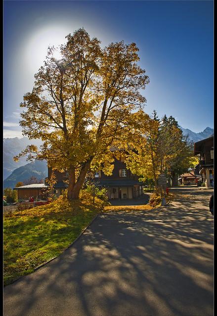 Swiss Autumn time in Mürren, Canton of Bern. October 22 , 2012. No. 9904.