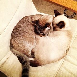 Circle of cat snuggle.