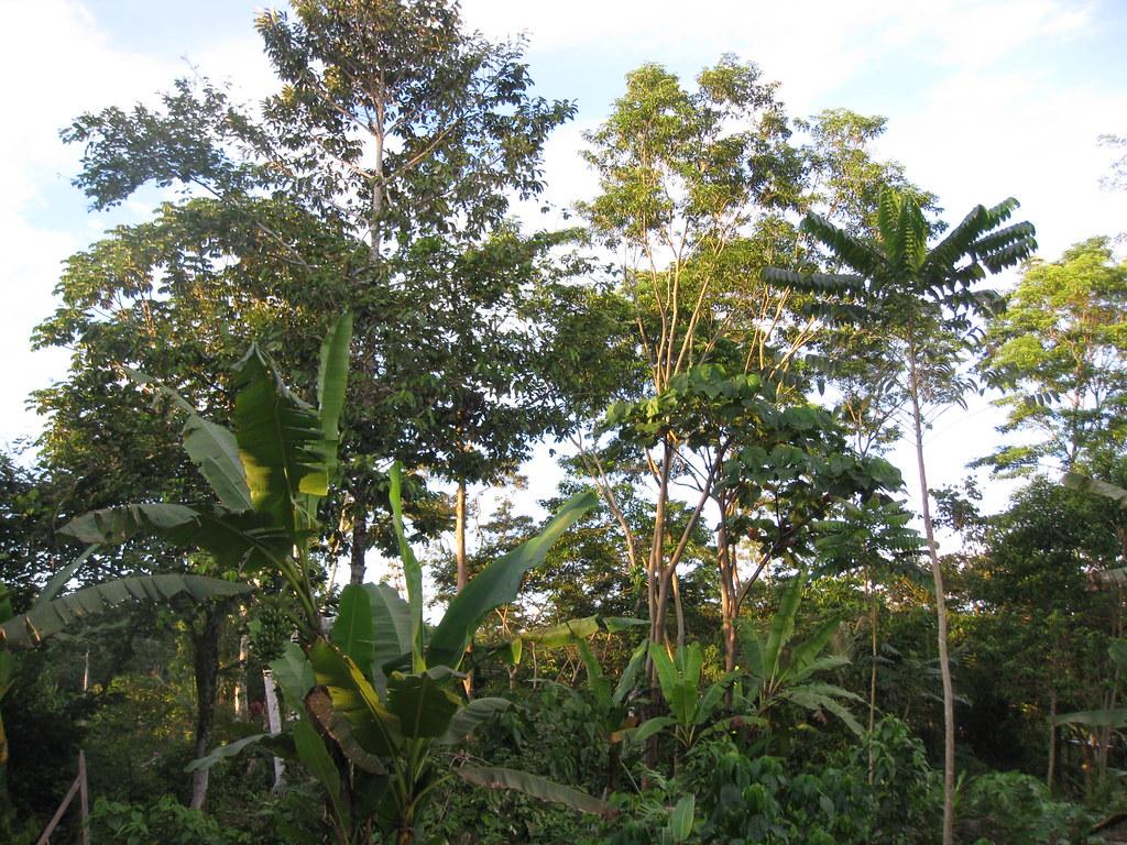 amazon jungle home