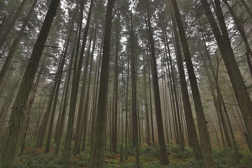 forest foggyforest washingtonstateforest steilacoom pacificnorthwest pacificnorthwestforest washingtonstate southsoundfroest fog canon5d3 canon 5d canon5dmarkiii wesleybphotography wesley214 wesleyburk