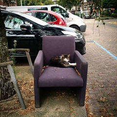 Voorburg cat gets comfy