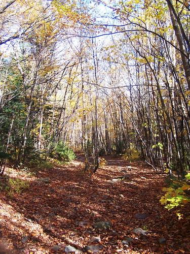 mountain color back lyon andyarthur