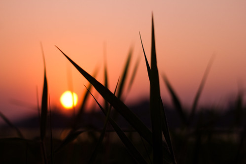 sunset sky sun grass sunshine silhouette evening bokeh bombay canon50mmf18 mumbai eveningsky goldenhour settingsun