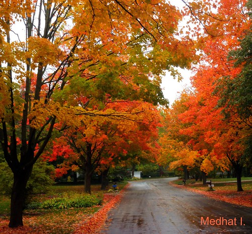 travel fall colors michigan medhathi mygearandme mygearandmepremium mygearandmebronze mygearandmesilver mygearandmegold mygearandmeplatinum mygearandmediamond