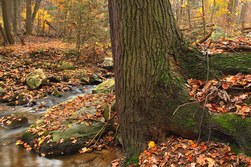 autumn trees nature leaves creek forest stream pennsylvania foliage creativecommons hemlock appalachiantrail leaflitter franklincounty redrun easternhemlock tsugacanadensis michauxstateforest beartownwoodsnaturalarea bicentennialtreetrail mentzergap