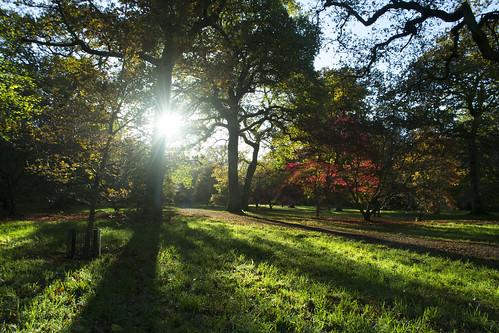 Westonbirt Arboretum #2 | by peterallenn