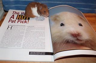 hamsteri porno sivusto