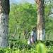 Le jardin Puttajhora, Dooars.
