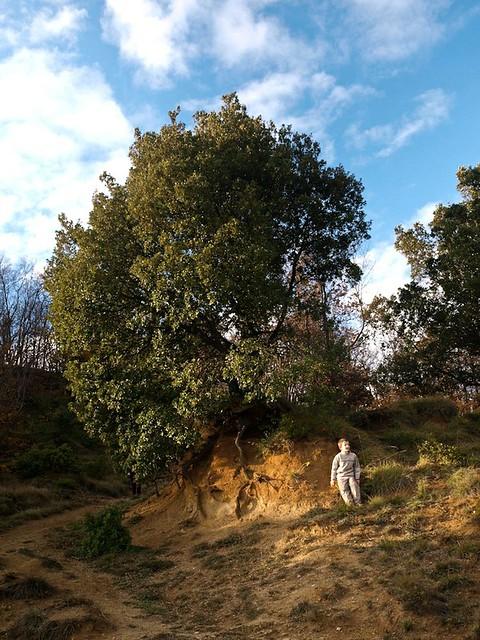 Ettore's Oak