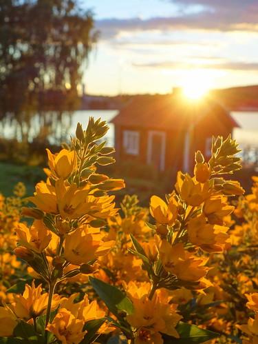 summer sunset cottage water lake trees flowers sunshine sunrays
