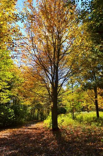 middletown autumn johnjmurphyiii park connecticut middletownnaturegarden usa 06457 foliage