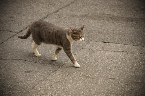 1119: kensington cat! | by emraps