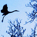 <p>Great Blue Heron Silhouette</p>