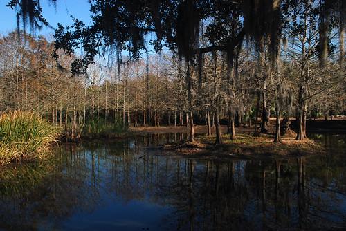 trees water reflections louisiana swamp spanishmoss averyisland