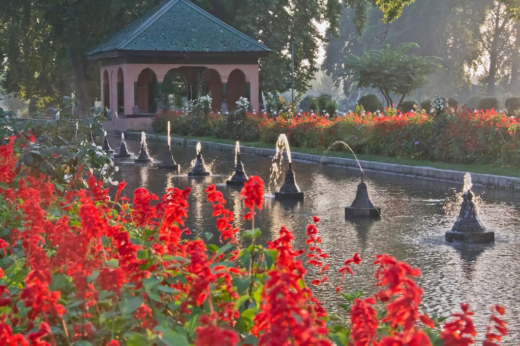 Mughal Garden flowers