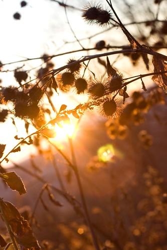 sun canada nature sunrise soleil québec flare marianneaudettechapdelaine marianneac marianneachapdelaine
