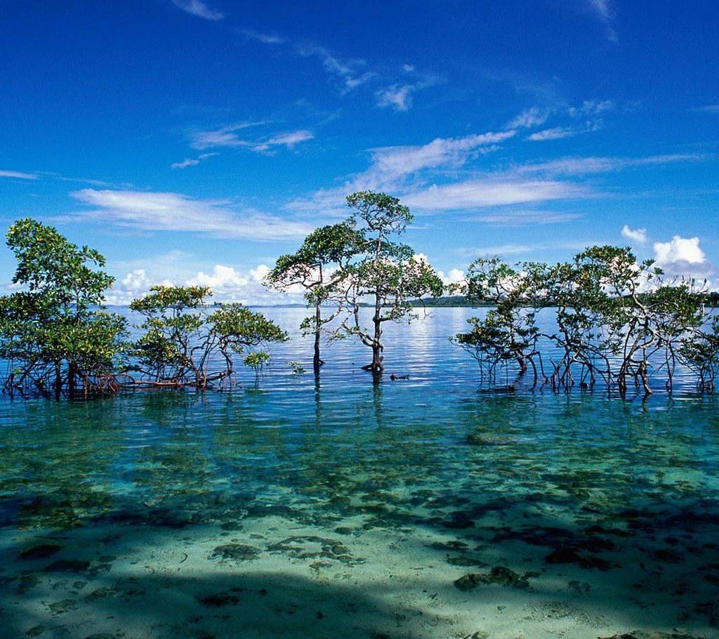 Havelock Island: Havelock Island_33