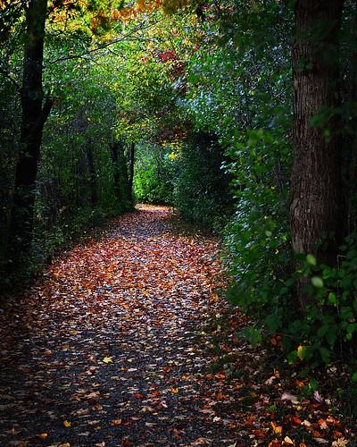 autumn light fall nature leaves outdoors buffalo tunnel birdsong hike foliage trail destination naturetrail orchardpark treetunnel lightattheendofthetunnel lightattheend buffaloniagara birdsongpark