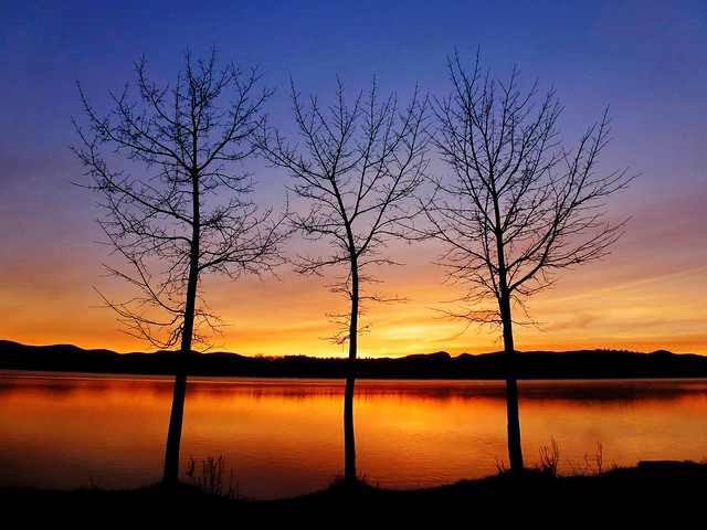 Three Trees At Sunrise