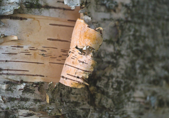 Tree of Life Coded Bark Strips