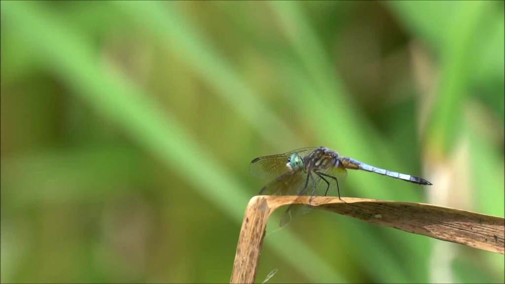 Dragonfly Slow Motion Take Off and Landing
