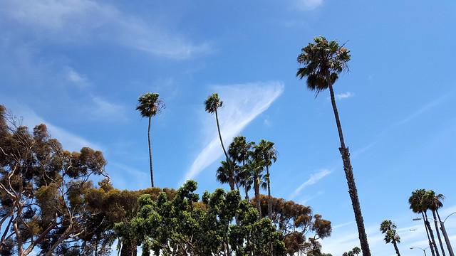 Marina Trees