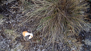 Orange peel left by some one | by Masa Sakano