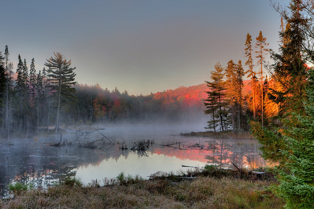 Early Morning, Algonquin Park