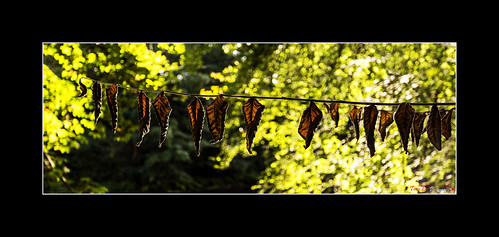 Hung Out to Dry_L7Q8600