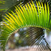 Palm Pattern by yago1.com