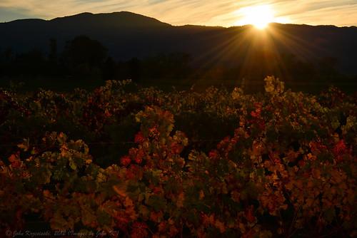 california light sunset sunlight fall angel vineyard nikon vine napa winecountry johnk d600 nikond600 camerawest johnkrzesinski randomok