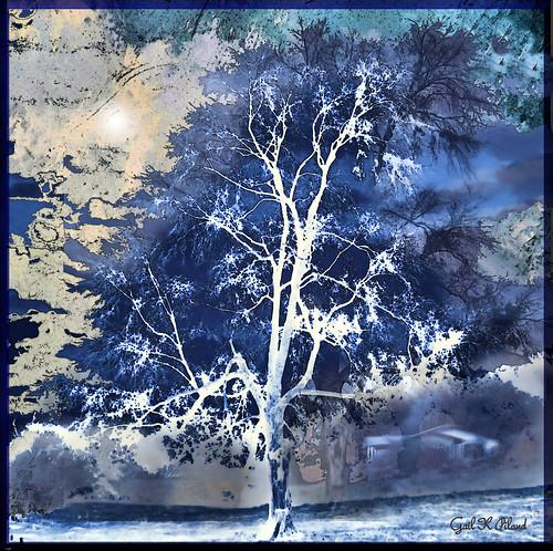 blue tree nature photoshop painting landscape soe textured thegalaxy flickraward awardtree gailpiland ringexcellence rememberthatmomentlevel1 rememberthatmomentlevel2 rememberthatmoment☆level1bronze