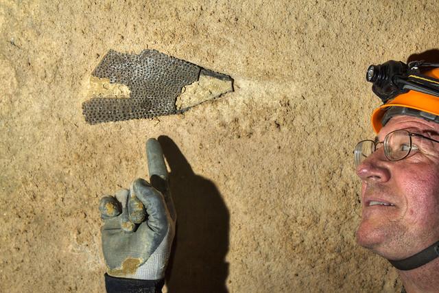 Unknown fossil, Monteagle Limestone, Ken Pasternack, TNFE94
