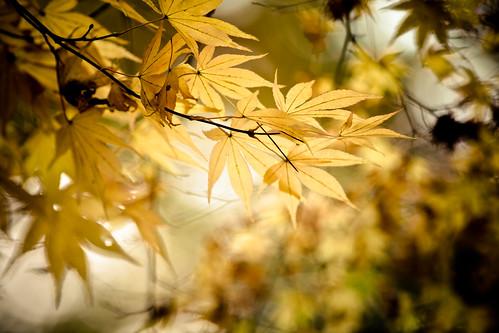 Momiji   by Imahinasyon Photography