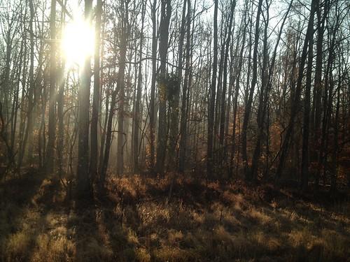 fairy tale forest | by jasoneppink