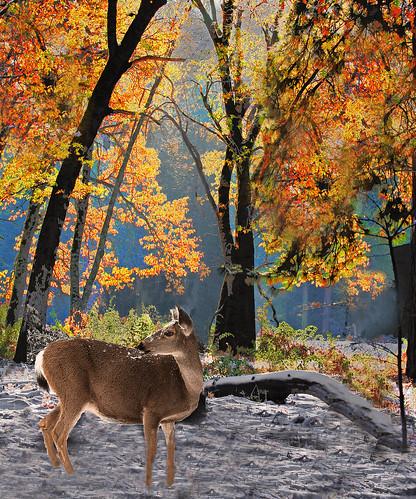 Deer in the Fall Trees | by Rennett Stowe
