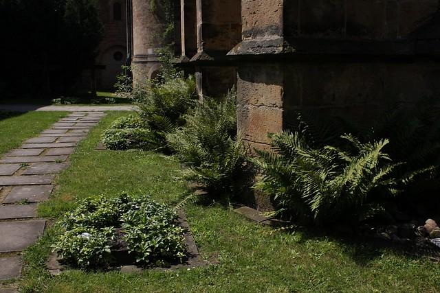Old walls, fresh flowers (IV)