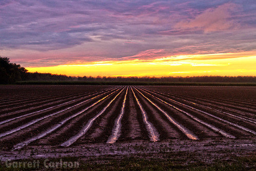 sunset field cane landscape photography louisiana mud south crops hdr sugarcane schriever canefield canefeild