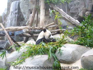 hong kong panda | by musicalhouses