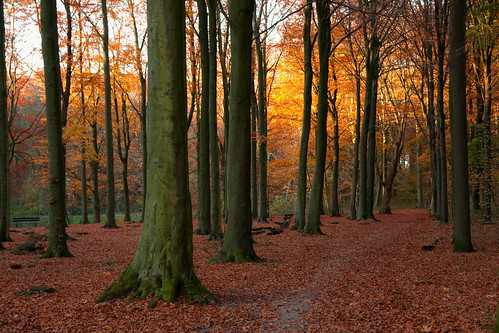 "city autumn light sun holland tree fall nature netherlands leaves forest canon landscape eos day colours herfst nederland denhaag bos zon thehague landschap autofocus haagsebos bladeren ""flickraward"" ""flickrawardgallery"" flickrhivemindgroup"