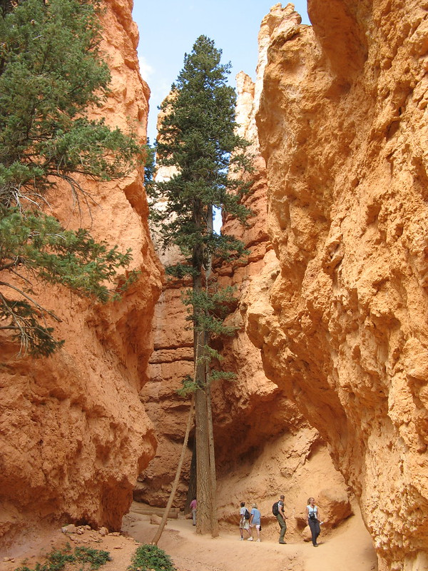 Bryce Canyon (Navajo Loop)