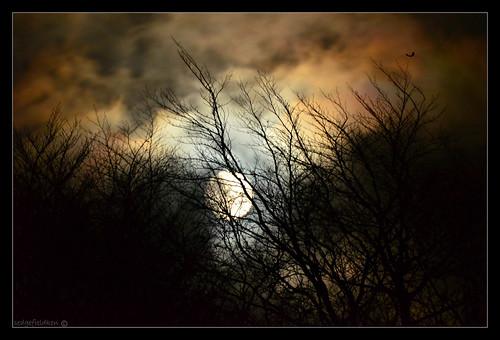 justclouds ukfrost moonmoonrisetreescloudsbranchnightsedgefield