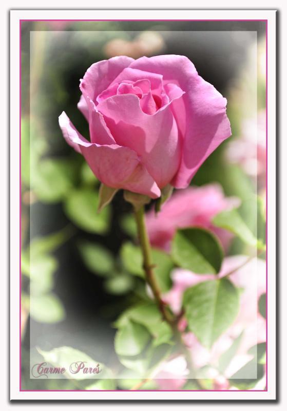 Feliz Domingo Me Encantan Los Salmos Son Poemas Escritos