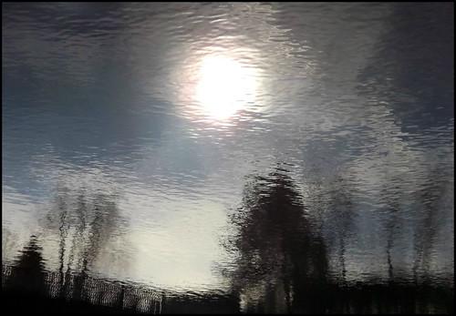 blue trees sun reflection tree water silhouette reflections pond silhouettes ripples waterabstract waterreflection waterreflections pondreflection waterripples pondreflections