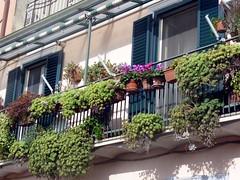 Strangolagalli Italy Stad Com