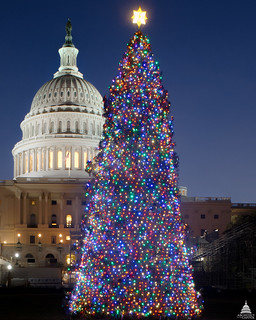 2012 U.S. Capitol Christmas Tree   by USCapitol
