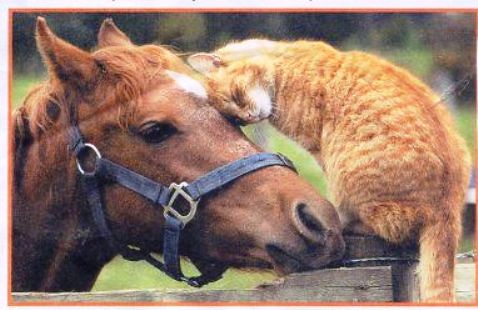 Cat and horse, friends 02