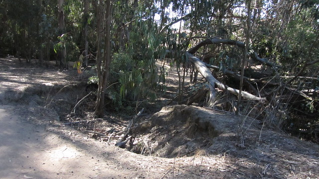 IMG_2811 Sperling trail erosion