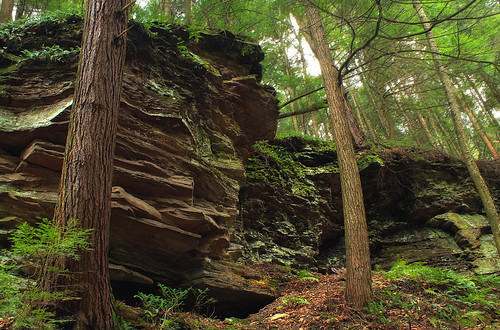 autumn trees forest moss rocks hiking pennsylvania creativecommons ravine wyomingcounty endlessmountains clintontownship southbranchtunkhannockcreek countrysideconservancy littlerockyglen