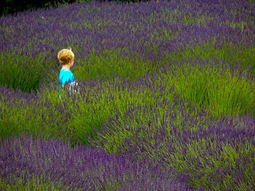 flowers boy summer landscape child lavender sequim wa 2012 scented lavenderfields 1bluecanoe
